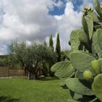 aquilamaior_giardino-6884